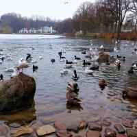 Воскресная прогулка (серия). Озеро, чайки, ресторан вдали :: Nina Yudicheva