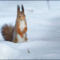 По снежной целине :: Александр Потапов