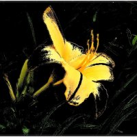 Золотой лилейник :: Нина Корешкова