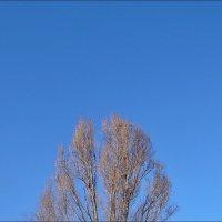 Безоблачное небо января :: Нина Корешкова