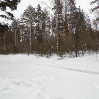В лесу. :: Мила Бовкун