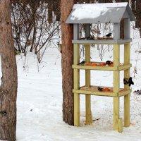 Птичья столовая . :: Мила Бовкун