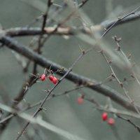 Во всём можно видеть благодать и красоту... :: Elena Danek