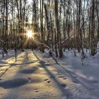 Тень на снегу . :: Va-Dim ...