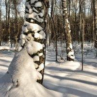 Тени на снегу :: Va-Dim ...