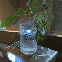 веточка ясенелистного клёна (клёна американского) :: Марина Буренкова
