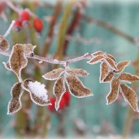 нежность мороза :: Юлия Карпович