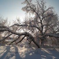 Зимние картины.. :: Андрей Заломленков
