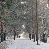 Утро зимнего леса :: Николай Белавин