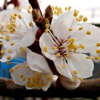 Сады цветут :: mAri