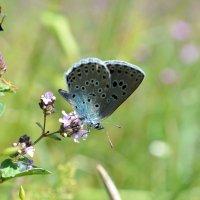Бабочка :: Евгения Петрунина