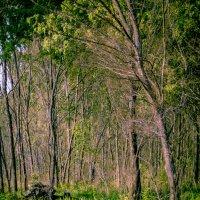 лес :: gegemoon