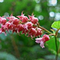 Цветочки смородины :: Nina Yudicheva