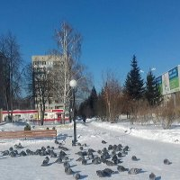 Солнечно , морозно , холодно -30 . Сибирь ! :: Мила Бовкун
