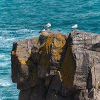 Чайки :: Олег Дурнов