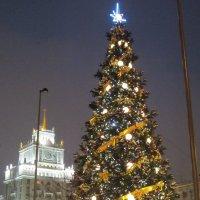 Ёлка в центре Москвы :: Дмитрий Никитин