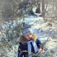 Зимняя сказка :: Olga Volkova
