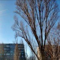 Солнечный свет в январе :: Нина Корешкова