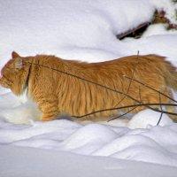 Рыжий охотник за птичками. :: Анатолий. Chesnavik.
