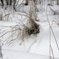 сухая трава :: оксана
