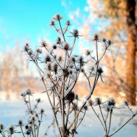Зимние цветы :: Андрей Заломленков