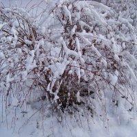 Снежные кружева :: Любовь К.