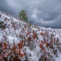 Цветная зима. :: Фёдор. Лашков