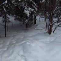 Люблю ли я зиму? - Даже не цветную люблю. :: Андрей Лукьянов