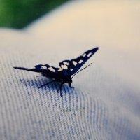 бабочка и джинсы :: Бармалей ин юэй