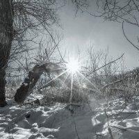 Январь... :: Владимир Натальченко