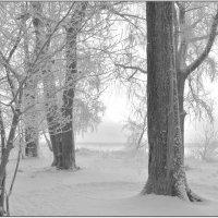 Туманное,морозное утро.Берег реки Онеги. :: Марина Никулина