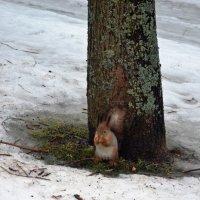 Среди снегов,среди зимы... :: Ольга
