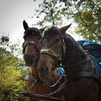 Баварские лошадки :: Олег Дурнов
