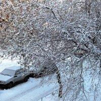 Зима ... :: Владимир Икомацких