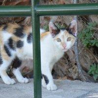 Кошка. :: Оля Богданович