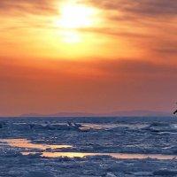 двое во льдах :: Ingwar
