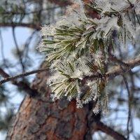 Зима в ажуре :: Ольга