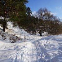 Лыжный денек :: Ольга Чистякова