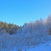 Мороз и солнце :: Юрий