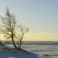 Финский залив.... :: Юрий Цыплятников