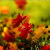Цветочное :: Olcen - Ольга Лён