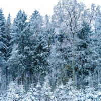 Зимняя красота :: Александр Демьянцев