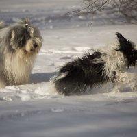 собачки рады хорошей погоде :: Лариса Батурова