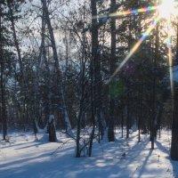 зима в лесу :: NikNik