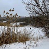 Замёрзшее озеро и одинокий рыбачок :: Татьяна Смоляниченко