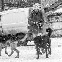 В собачьем приюте :: Ольга Лапшина