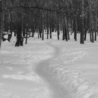 Лес в городе. :: Evgenija Enot