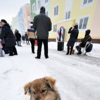 не моё собачье дело... :: Сергей Демянюк