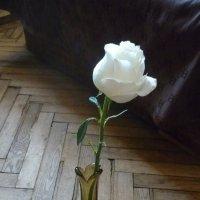 Одинокая... :: Татьяна Юрасова