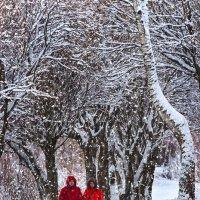 В зимнем парке :: Сергей Ефименко